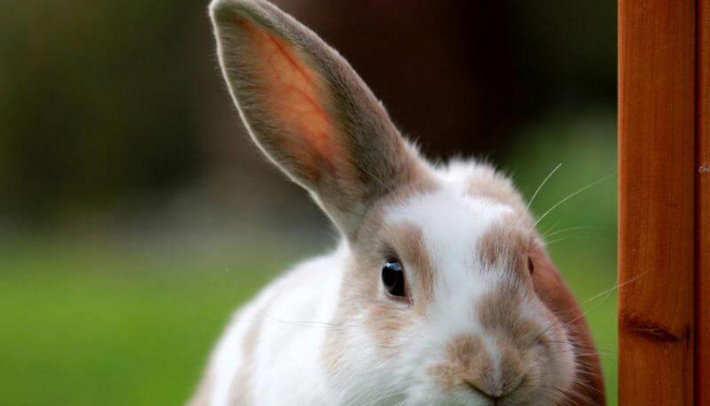 testare animale cosmetice