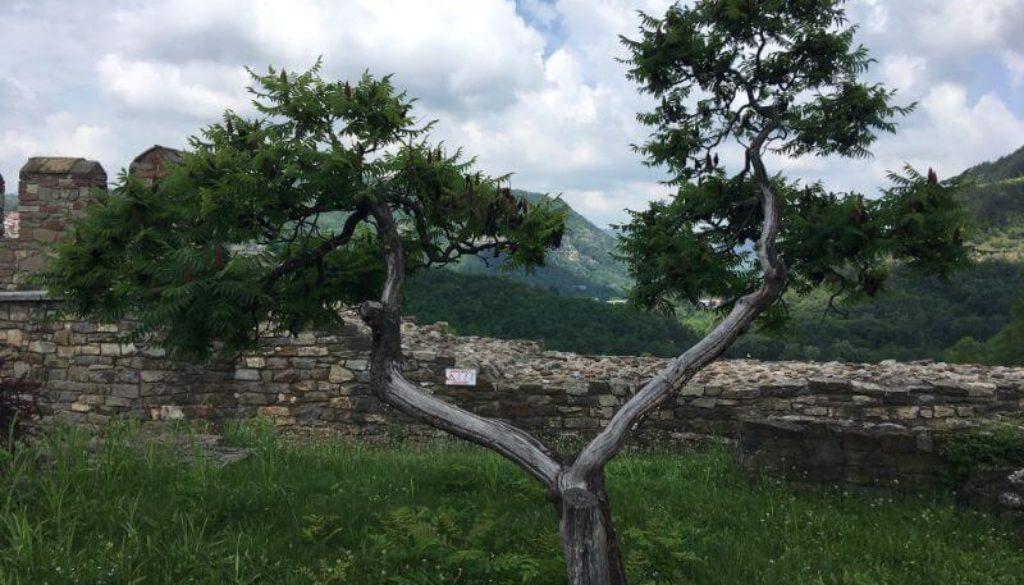natura calatorie copac cetate 1