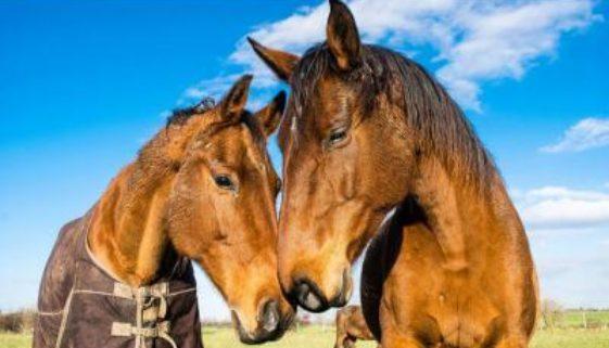 De ce airbnb interzice experiențele care dăunează animalelor 0