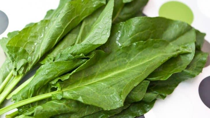 frunze de stevie vitamine