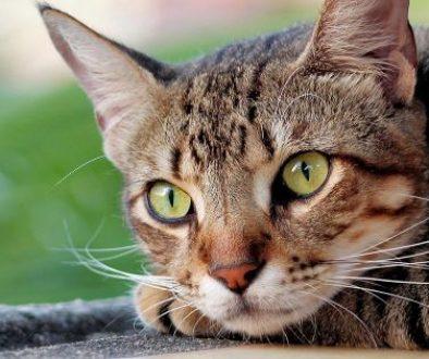 cat-4269479_FTR (1)