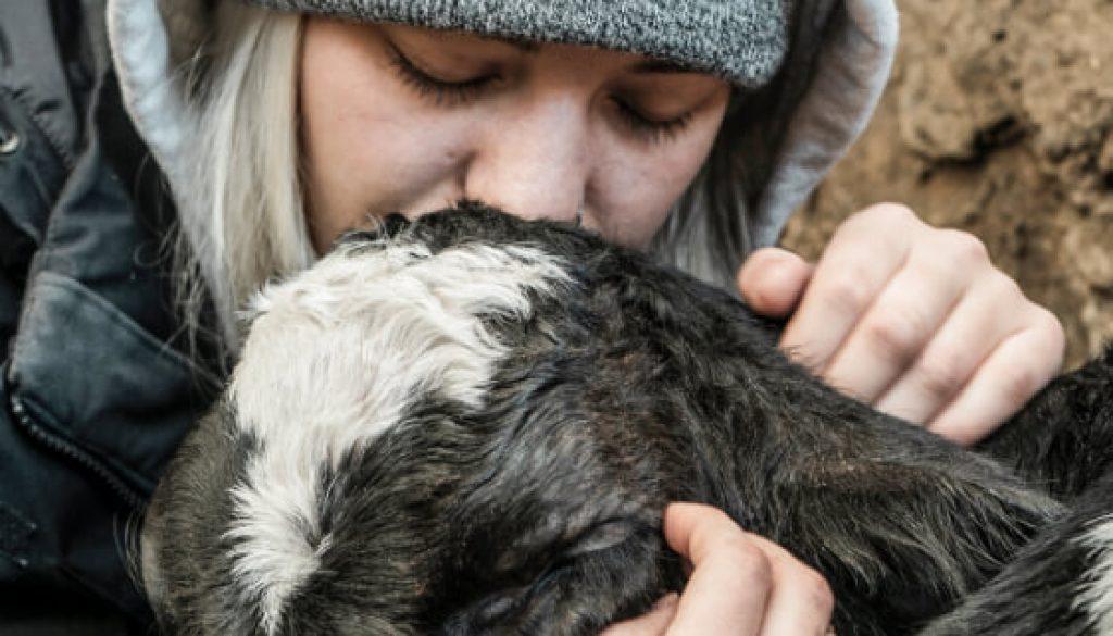Scrisoare pentru animale de Diana Musca de la Fil Natura Umana 2 main